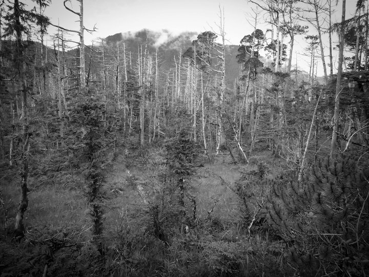 Forest Dieback